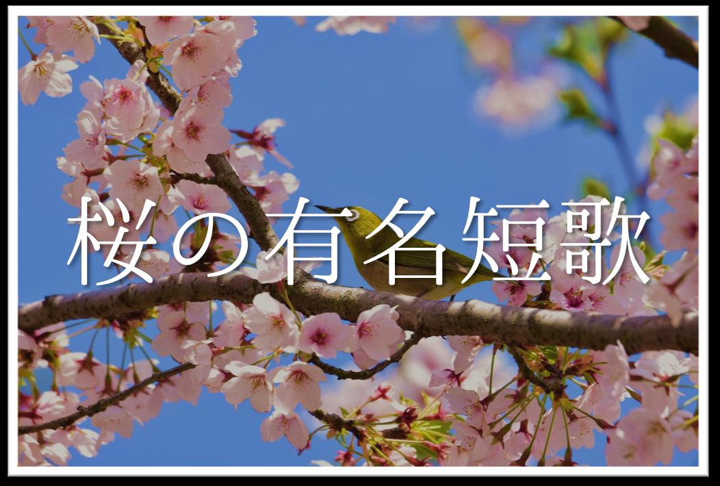 【桜の有名短歌 30選】知っておきたい!!おすすめ短歌(現代&和歌)作品集を紹介!