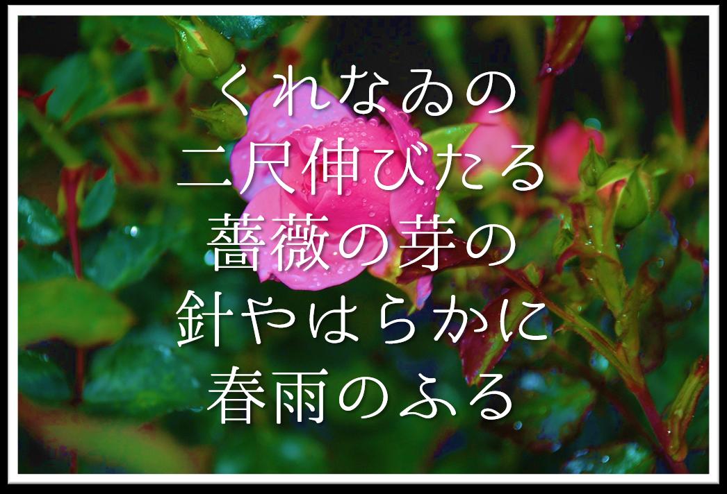 【くれなゐの二尺伸びたる薔薇の芽の針やはらかに春雨のふる】徹底解説!!意味や表現技法・句切れ・鑑賞文など