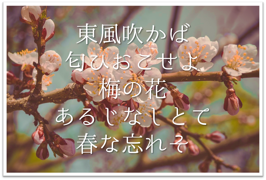 【東風吹かば匂ひおこせよ梅の花あるじなしとて春な忘れそ】徹底解説!!意味や表現技法・句切れなど