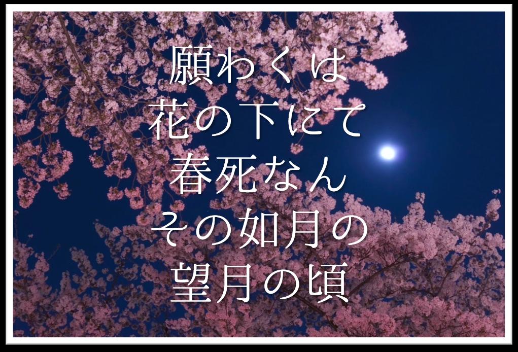【願わくは花の下にて春死なんその如月の望月の頃】徹底解説!!意味や表現技法・句切れなど