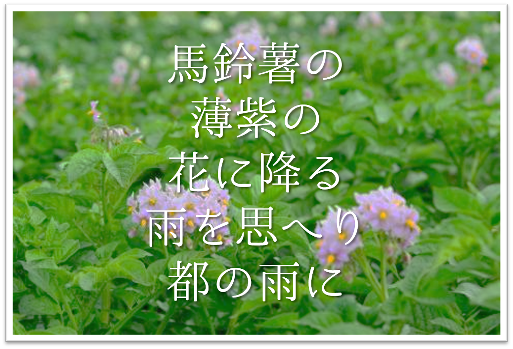 【馬鈴薯の薄紫の花に降る雨を思へり都の雨に】徹底解説!!意味や表現技法・句切れ・鑑賞など