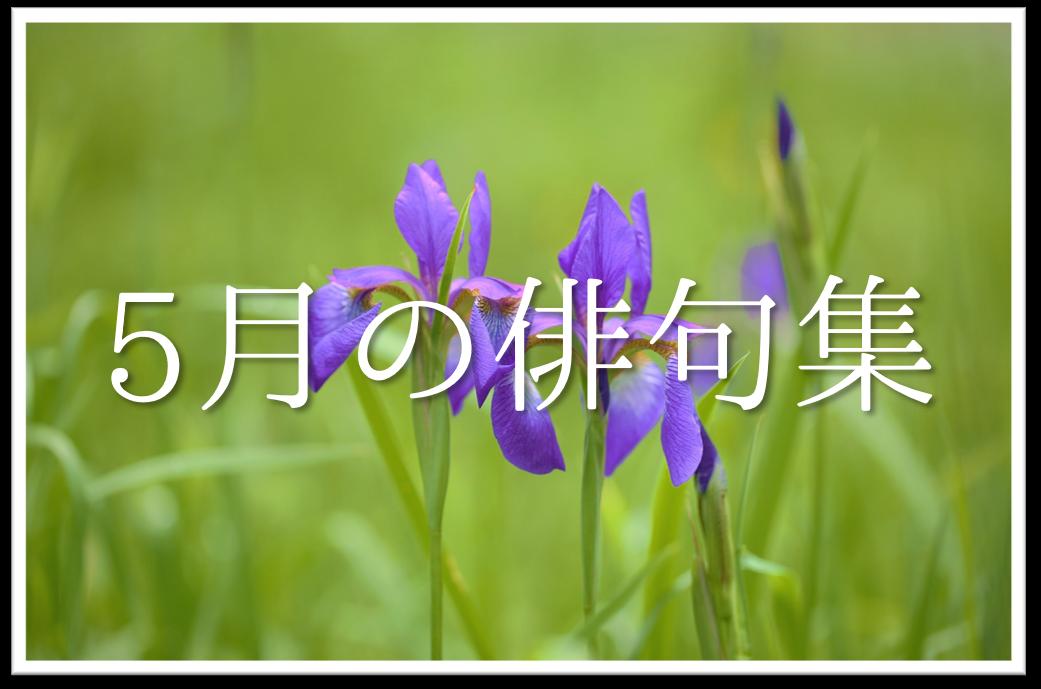 【5月の短歌(和歌)集 20選】おすすめ!!5月を感じる有名短歌作品を紹介!