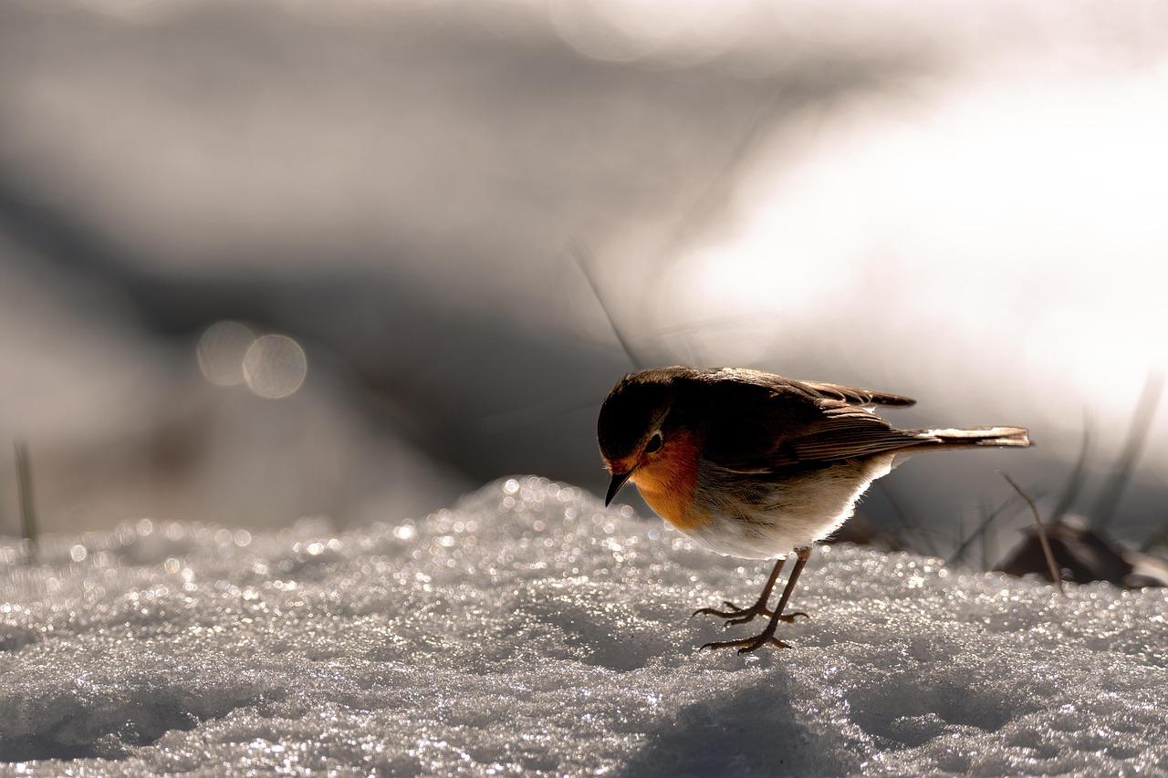 の け 年 の の 今日 新しき 吉事 初め いやし 降る 初春 雪 の