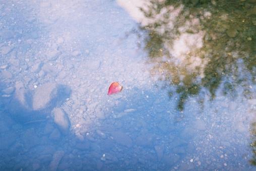 多摩川 に さらす 手作り さらさら に 何 そこ の 児 の ここだ かなしき 万葉集「多摩川にさらす手作り~」解説・品詞分解・現代語訳