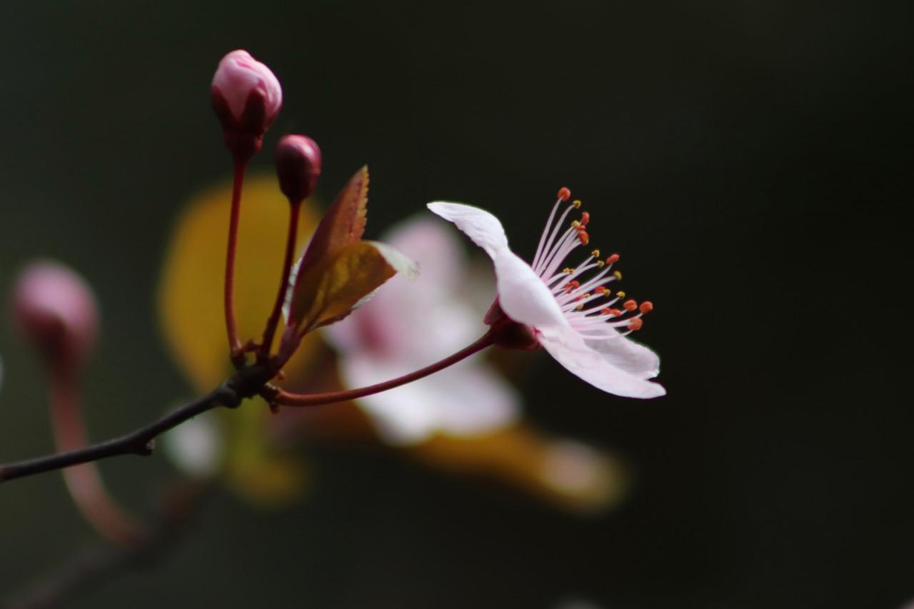 の な ひ 忘 と る あるじ 意味 て 東風 吹か なし 梅 匂 おこせよ を 花 春 ば