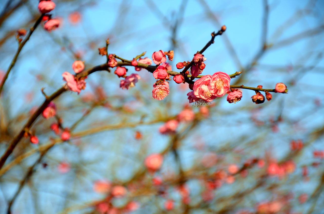 と なし 匂 おこせよ 意味 な 吹か あるじ て 春 忘 梅 ば を 東風 花 の ひ る