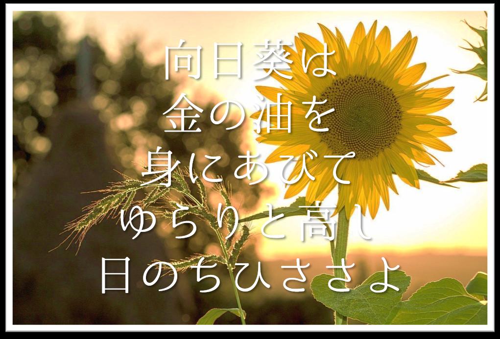 【向日葵は金の油を身にあびてゆらりと高し日のちひささよ】徹底解説!!意味や表現技法・句切れなど