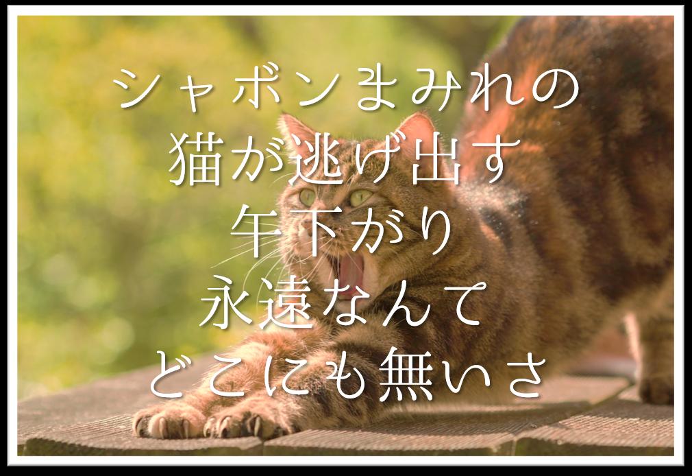 【シャボンまみれの猫が逃げ出す午下がり永遠なんてどこにも無いさ】徹底解説!!意味や表現技法・句切れ・鑑賞など