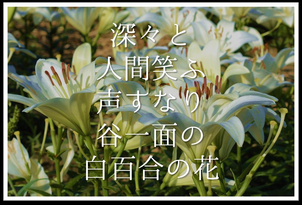 【深々と人間笑ふ声すなり谷一面の白百合の花】徹底解説!!意味や表現技法・句切れなど