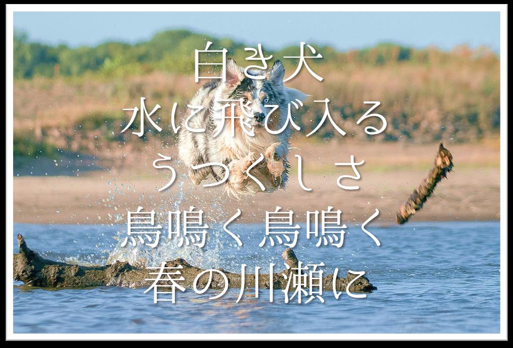 【白き犬水に飛び入るうつくしさ鳥鳴く鳥鳴く春の川瀬に】徹底解説!!意味や表現技法・句切れ・鑑賞文など