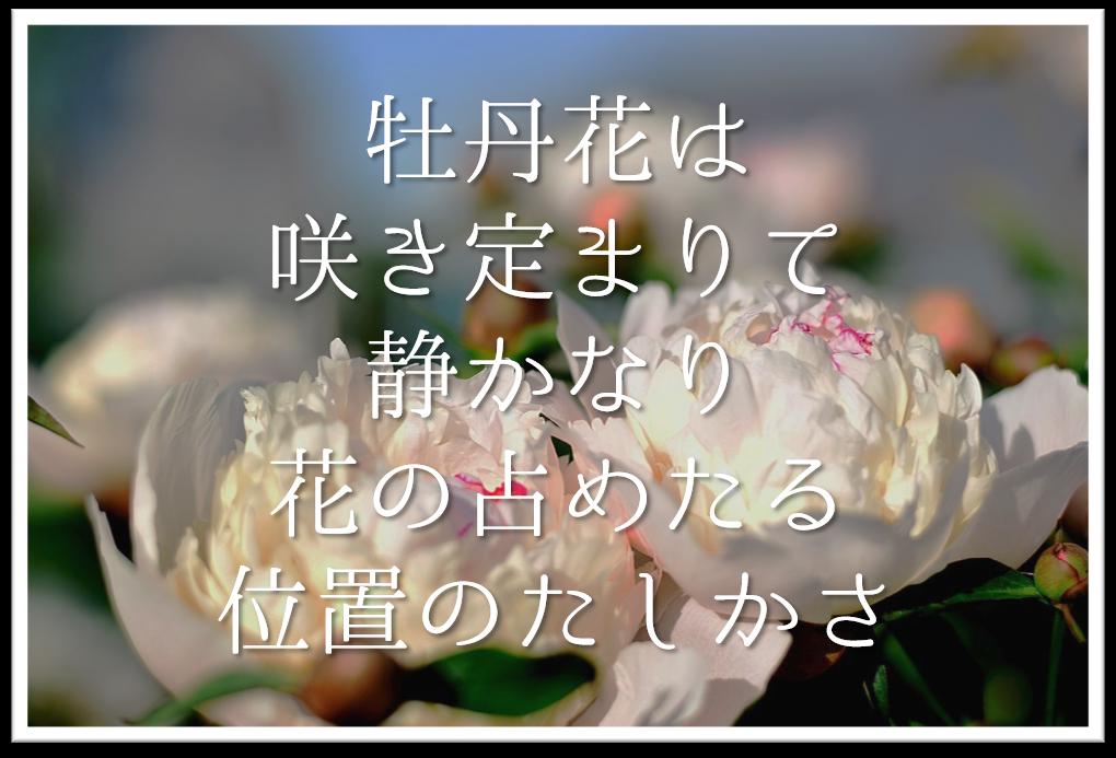 【牡丹花は咲き定まりて静かなり花の占めたる位置のたしかさ】徹底解説!!意味や表現技法・句切れなど