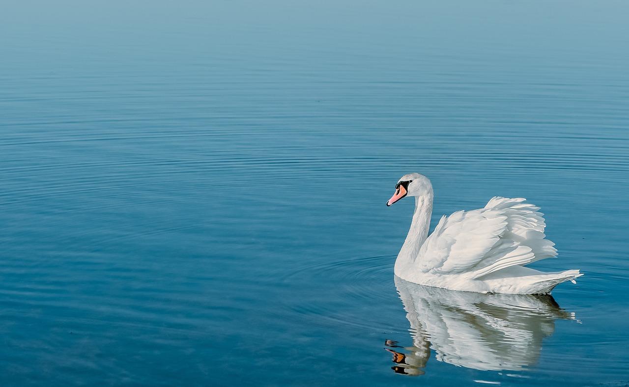 あ から ふ を は 空 青海 ず 哀し 意味 ただ も 染 白鳥 の に まず や の よ