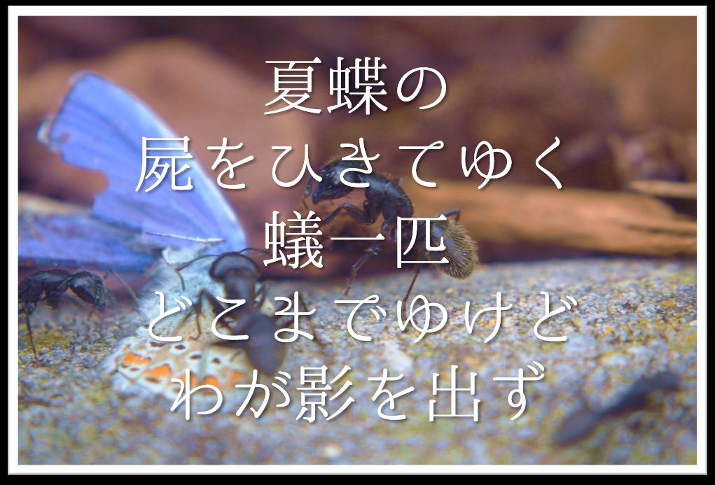【夏蝶の屍をひきてゆく蟻一匹どこまでゆけどわが影を出ず】徹底解説!!意味や表現技法・句切れなど