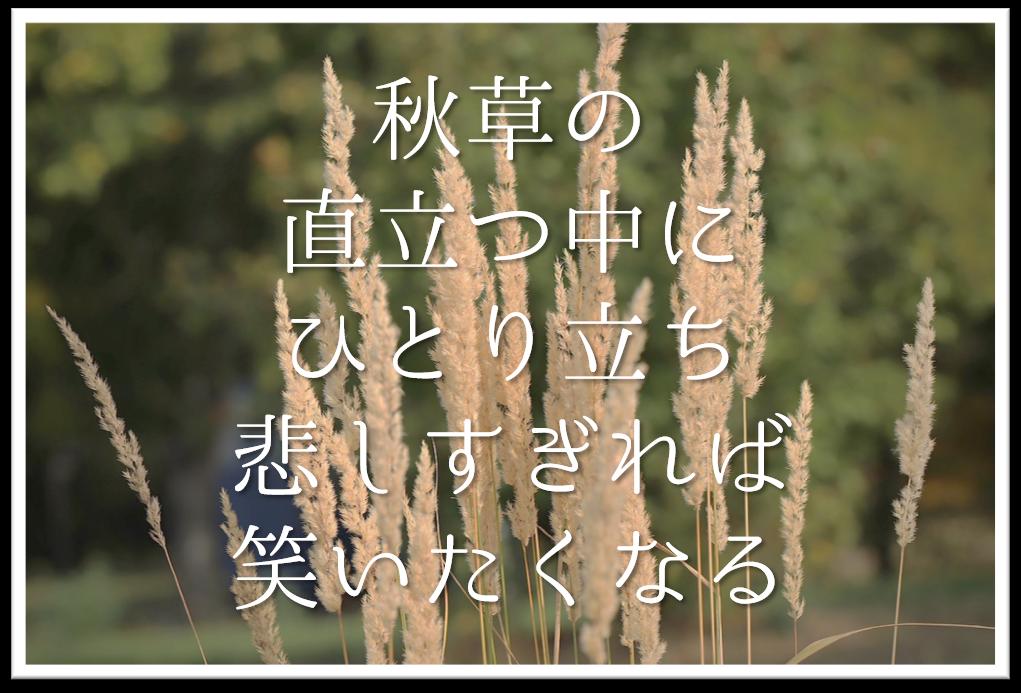 【秋草の直立つ中にひとり立ち悲しすぎれば笑いたくなる】徹底解説!!意味や表現技法・句切れ・鑑賞文など